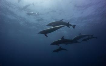 Daniël Versteeg - Diving heaven on earth.........by far!!!!!!!!!!!