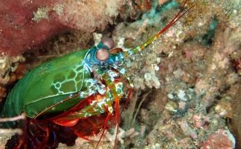 Wouter Hoogerwerf - Van Makassar tot Mantis shrimp (4)
