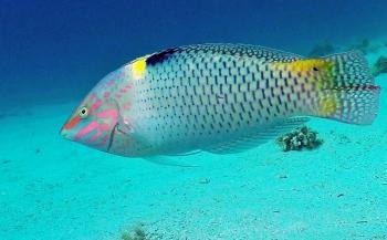 Dirk Van den Bergh - De spectaculairste duikstek van Dahab!