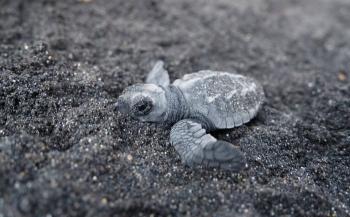 Dive into Lembeh zwaait schildpadjes uit