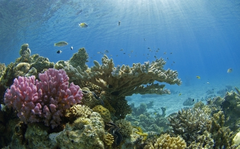 Diving Holidays organiseert info-avond Red Sea Diving Safari