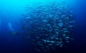 Laat je betoveren bij Diving Holidays