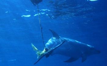 Mooie redding door Nederlandse duiker