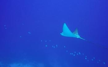 De hoofdprijs op Bonaire