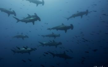 Reportagewedstrijd 2016 - Yo nadé con tiburones y sobrevivi