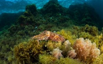Avontuurlijk duiken én dichtbij