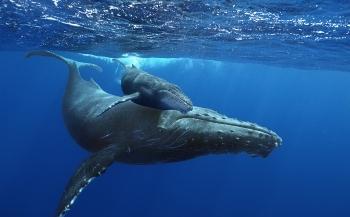 Nu in het Omniversum: Giant Whales