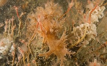 2018 begint met 66 Nederlandse soorten zeenaaktslakken