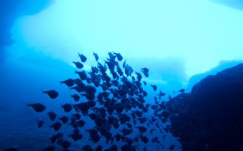 Curaçao viert de haai met ambassadeur Jörgen Raymann