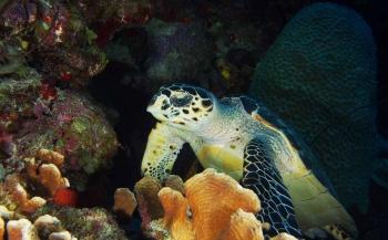 In de duikflow op Bonaire