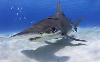 Help onze haaien beschermen!