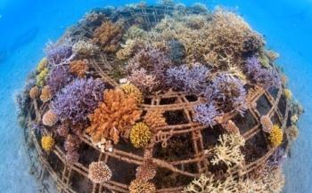 Harbour Village Bonaire en Cousteau zetten zich in voor oceaanbehoud