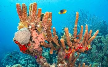 Wat is STINAPA Bonaire?