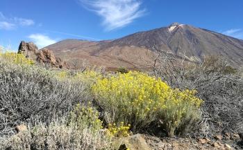 Steven Stegeman - Tenerife, eiland van de eeuwige lente