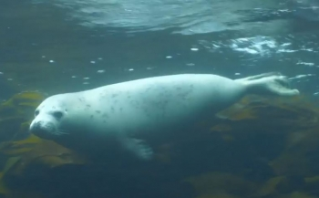 Vlog 'In de Noordzee' - Duiken met zeehonden