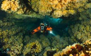 Rotsbogen vol koralen