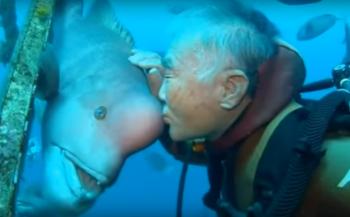In beeld: de vriendschap tussen duiker en vis