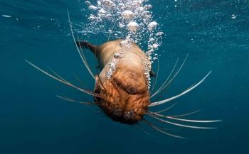 Joost van Uffelen - Spelen met zeeleeuwen