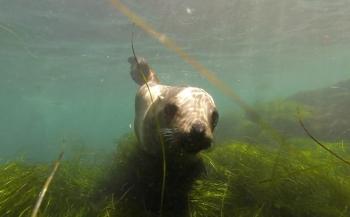 Bas Kulderij - Kelp, zeeleeuwen en haaien