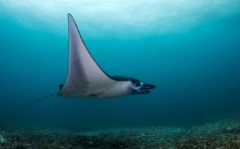 Op reis naar Komodo met specialisatie Onderwaterbiologie Wereldwijd