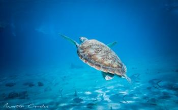 Martin Cordes - De Caraïbische zee