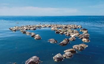 Honderden bedreigde schildpadden in netten verstrikt