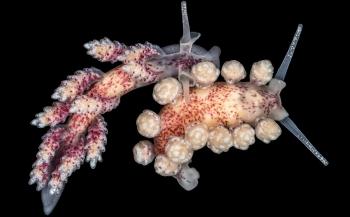 Zeedieren fotograferen als kunstvorm