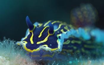 Nog meer 'onder water' tijdens Nature Talks