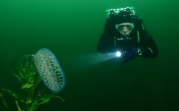 Arie Vreugdenhil en Erik Linden zegevieren bij Open Limburgs Kampioenschap Onderwaterfotografie