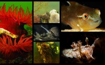 Prijsuitreiking (O)NK en ZK Onderwaterfoto- en videografie