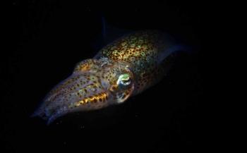ONK Onderwaterfotografie 2018 - Masters - Macro