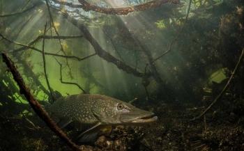 ONK Onderwaterfotografie 2018 - Zoet water