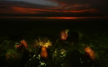 ONK Onderwaterfotografie 2019 - Masters - Groothoek