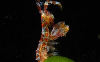 ONK Onderwaterfotografie 2019 - Masters - Macro