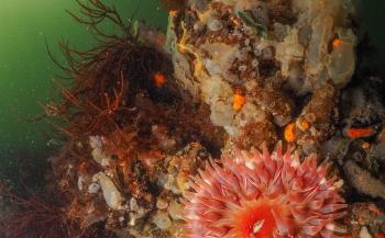 ONK Onderwaterfotografie 2019 - Starters - Beste serie