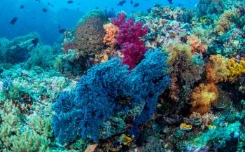 Passport to Paradise – Bounty-eiland Bangka