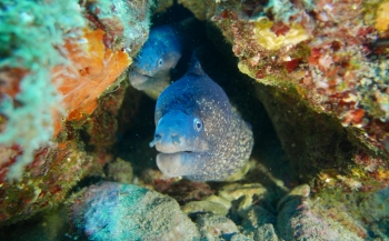 Eric Zetz - Medes: een sprookje onder water