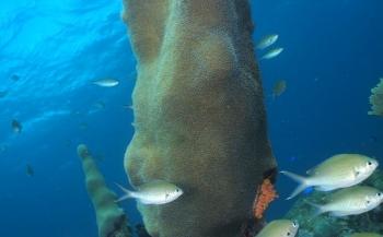 Frank de Bruin - Mangel Halto Reef