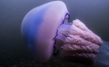 Bas Brand - Zeepaddenstoel