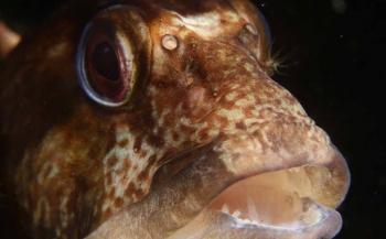 ONK Onderwaterfotografie 2017 - Top 10 Visportret