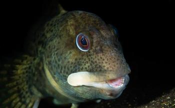 René Weterings - Stoere steenslijmvisjes