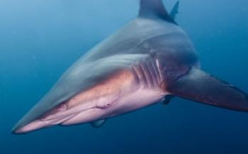 Review: WildOcean in het Omniversum