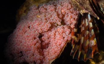 René Weterings - Zeedonderpadden en hun nestjes