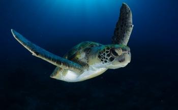 Duikvaker 2020 - Tips voor onderwaterfotografie van de Nederlands Kampioen