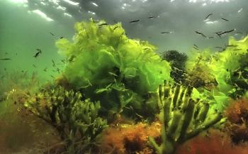 Nieuwe bijlagen bij Handboek digitale onderwaterfotografie