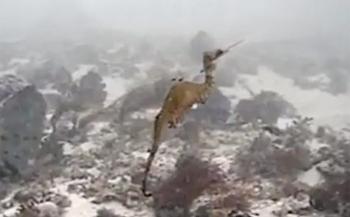 Nieuwe soort zeedraakje - de eerste beelden