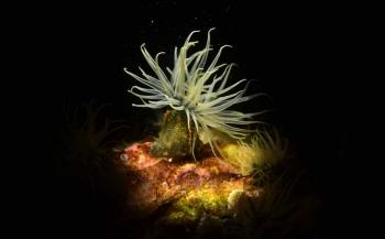 ONK Onderwaterfotografie 2017 - Top 10 Overall