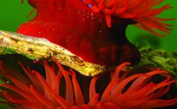 ONK Onderwaterfotografie en -videografie - wedstrijdperiode 2