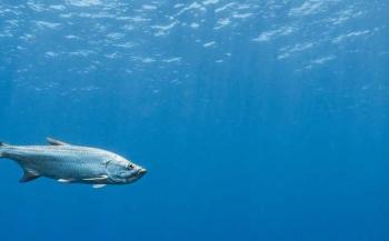 Bonaire wordt eerste Blue Destination