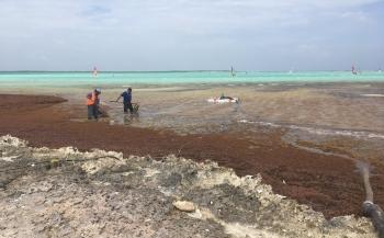 Geen sargassum aan 'andere' kant van Bonaire